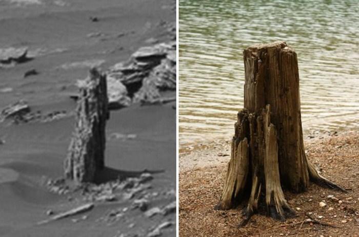 Пенек окаменевшего дерева обнаружен на Марсе