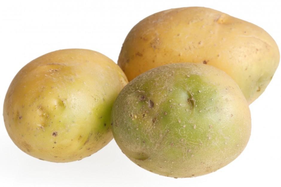 Насколько ядовит позеленевший картофель, или отравление соланином