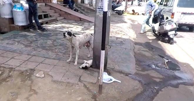 Cобака отчаянно лаяла и звала людей на помощь, ведь погибал ее щенок