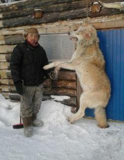 Волк-монстр