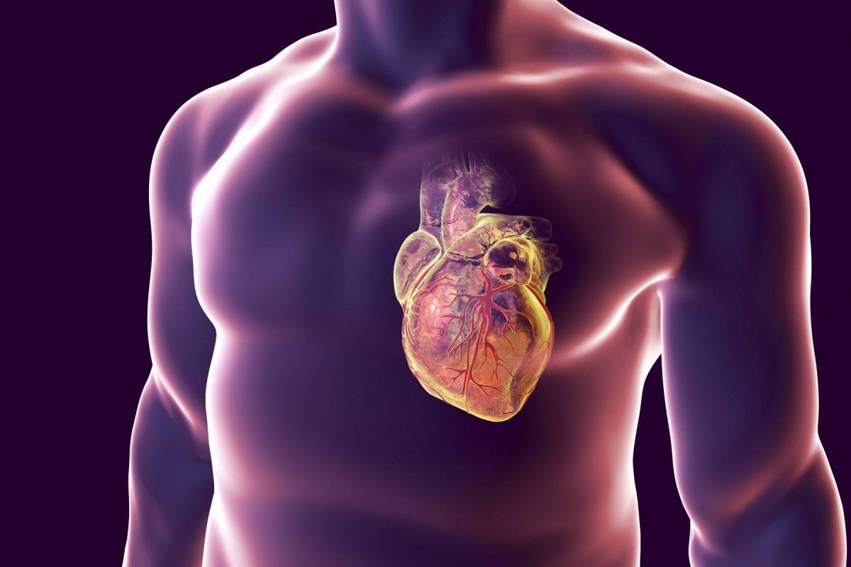 Кардиологи назвали простой способ, как самостоятельно проверить здоровье сердца