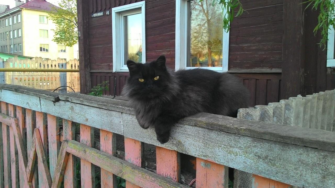Братья наши меньшие: почему хорошо, когда у вас несколько кошек