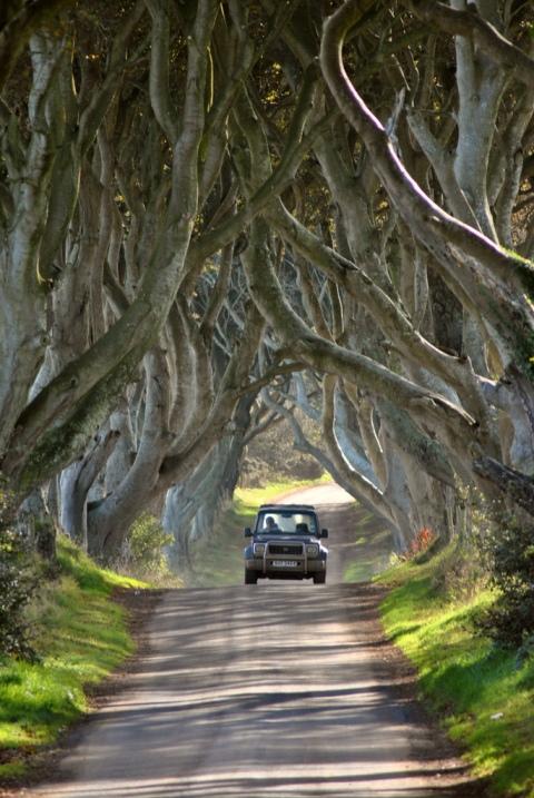 Темная аллея буков в Северной Ирландии. Фото