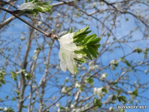 Весна для Ваших мониторов