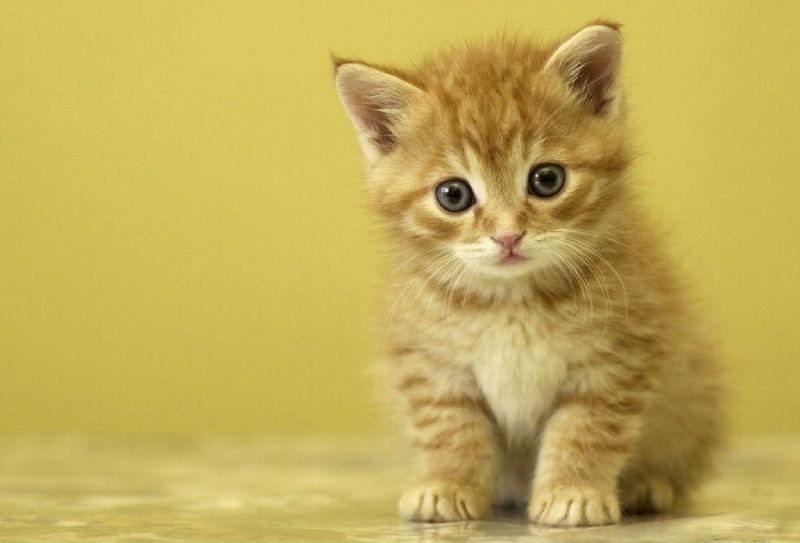 13 причин завести кошку, если у вас её ещё нет. Ну, или ещё одну, если есть