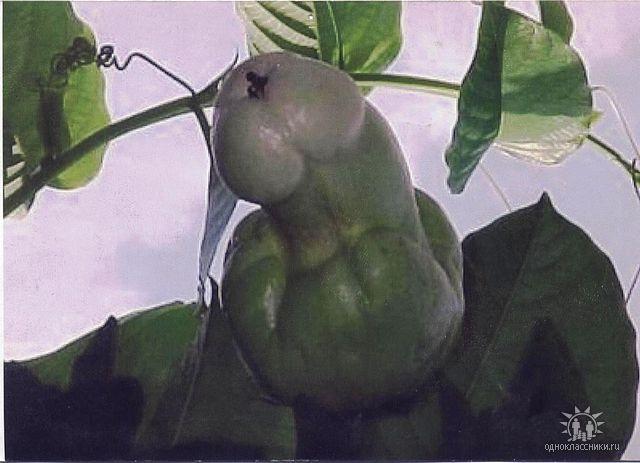 Помогите!!!! Что за фрукт?