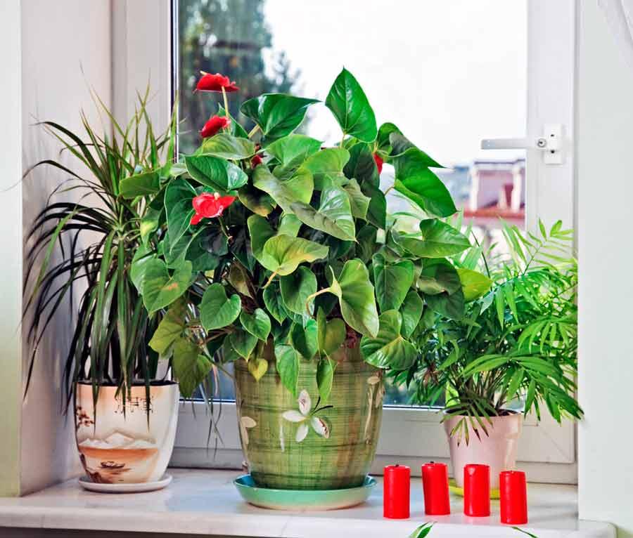 На чем разместить комнатные цветы в квартире