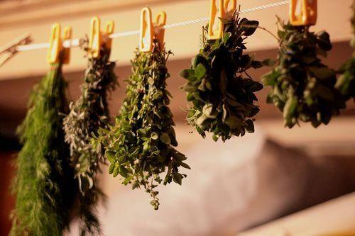 Запасаемся на зиму: лечебные травы