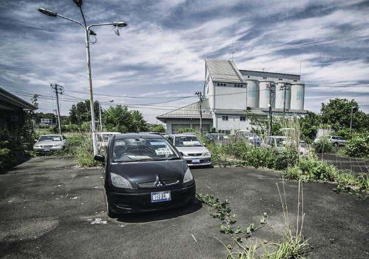 Прорастают цветы сквозь асфальт зона отчуждения, радиоактивная зона, фото, фукусима, япония