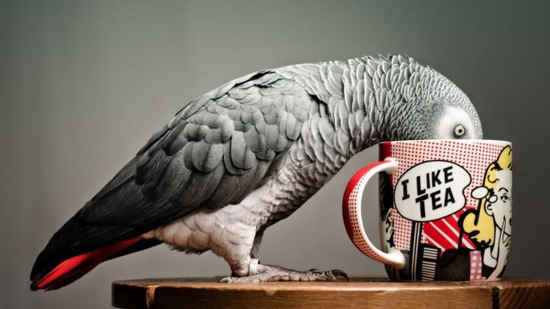 Про попугая