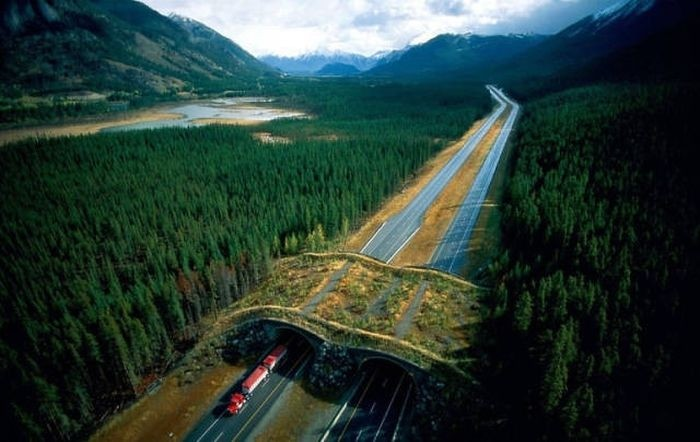 Потрясающие мосты для животных, сделанные человеком