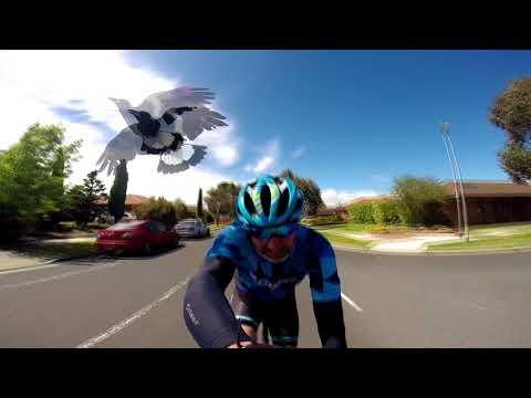 Американского велосипедиста атаковала птица