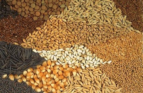 Семянотерапия — лечение семенами.