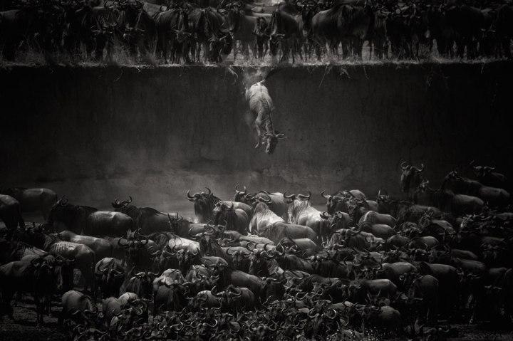 «Великая миграция», Николь Камбр national geographic