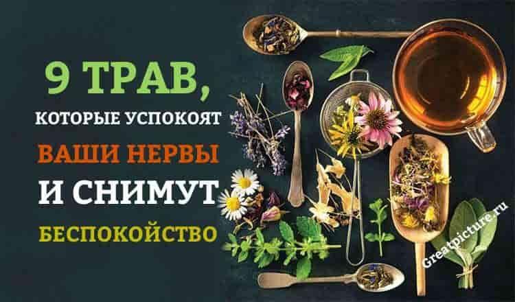 9 трав, которые успокоят нер…