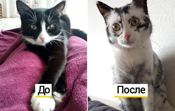 Обычная чёрно-белая кошка начала белеть и за 3 года полностью изменилась. У неё болезнь