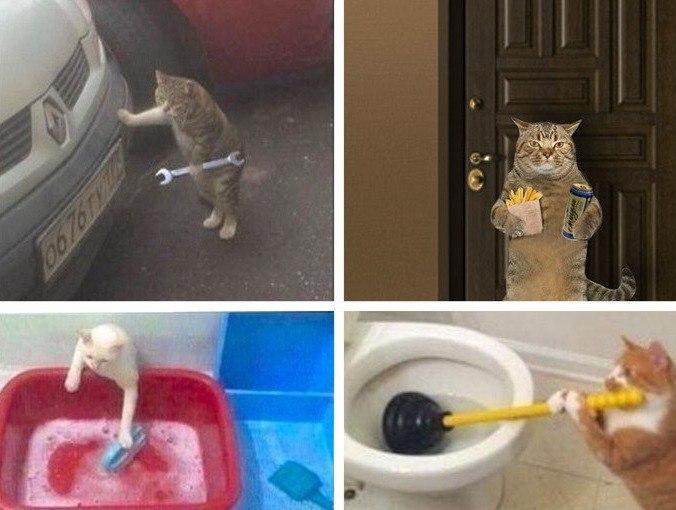 Когда сказал коту, что вам н…