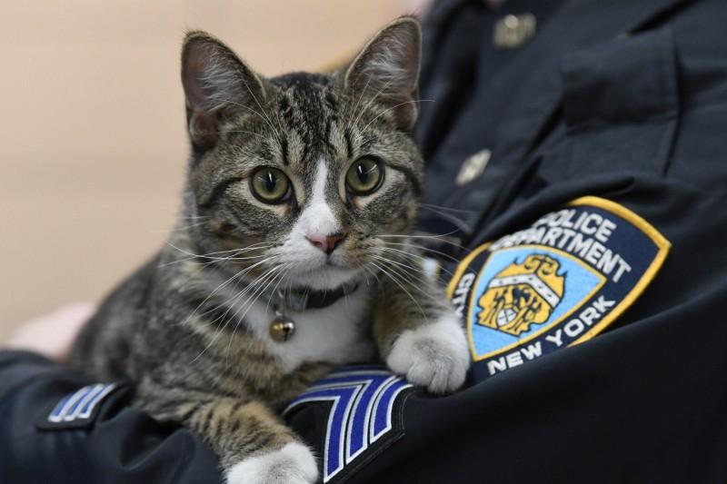 Полицейские Бруклина взяли на службу кота