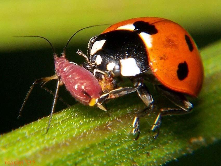Как привлечь в свой сад полезных насекомых