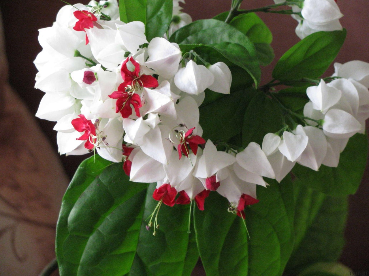 Цветы домашние фото и названия не цветет