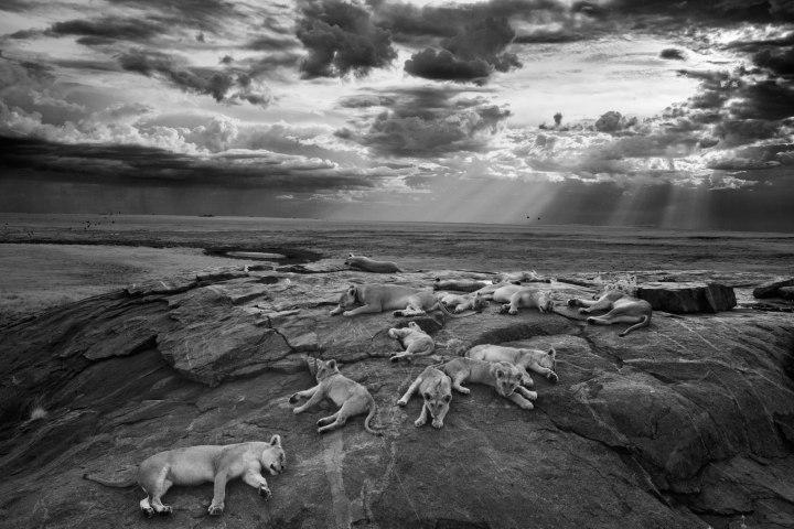 Гран-при – «Последний отличный кадр», Майкл Николс Лучшие фотографии дикой природы 2014 года