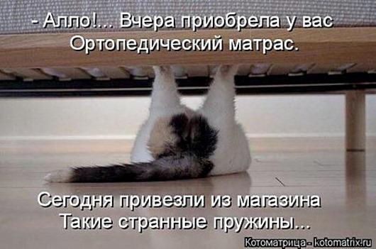 1488563601_kotomatrica-20