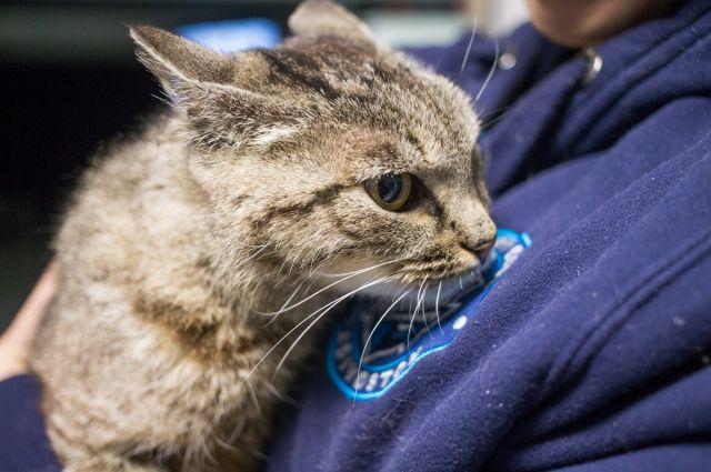 Во Владивостоке открыт памятник кошке Матроске