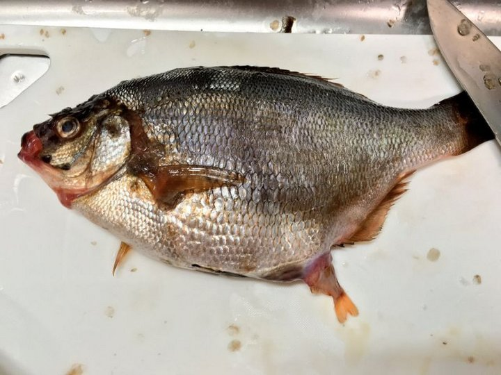 Покупая одну рыбку, можно получить целый косяк