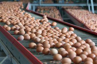 Опасные яйца. Чем обернётся для России фипрониловый скандал