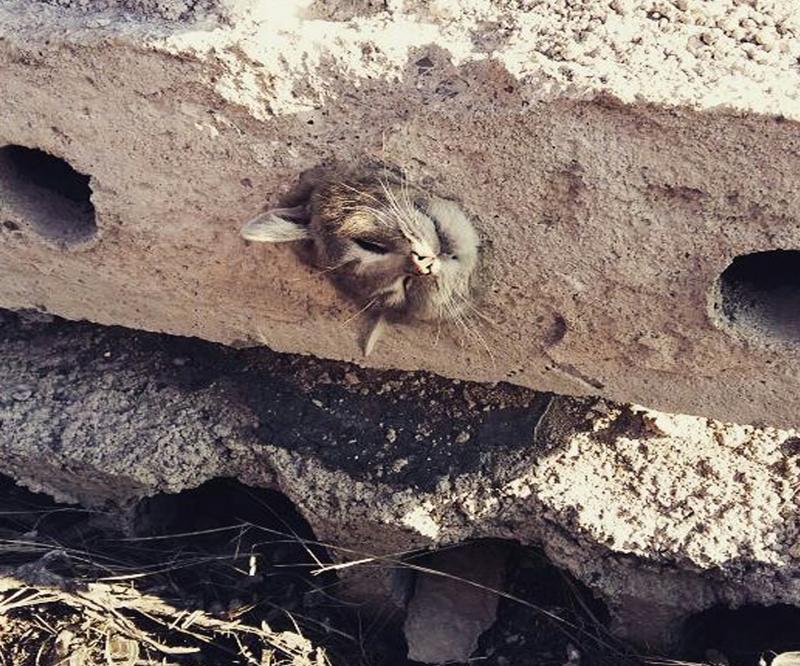 В Караганде спасли застрявшую в бетонной плите кошку