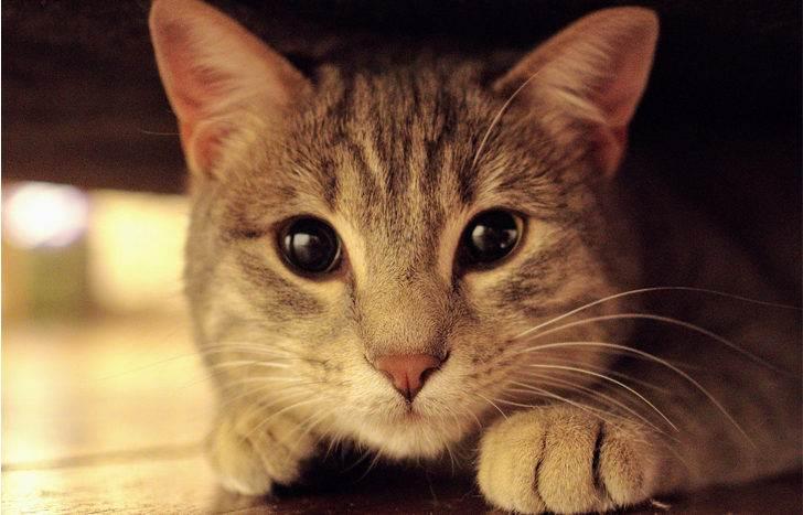 В порыве гнева хозяева выкинули кота с шестого этажа