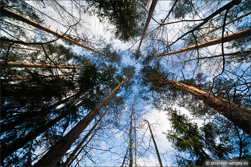 Один ноябрьский день в лесу