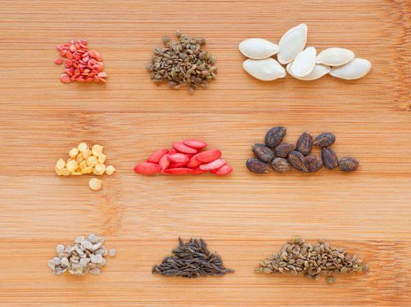 Что должен знать о семенах каждый дачник