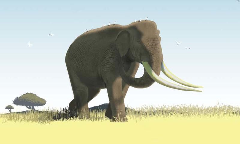 6. Азиатский прямобивневый слон гигант, животные, планета