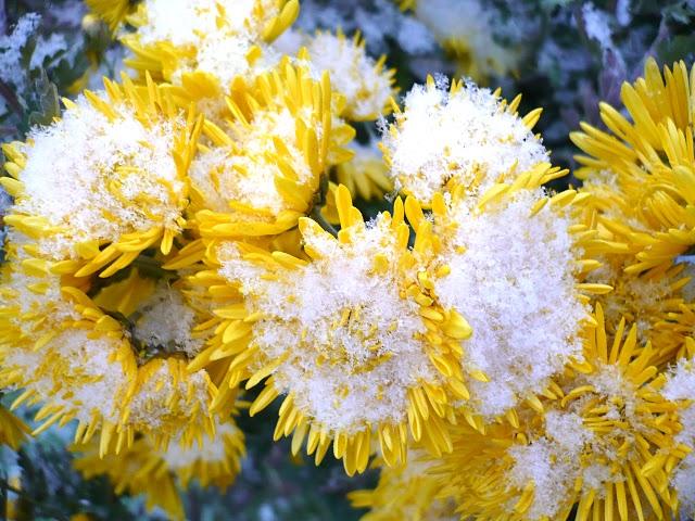 Зимний ландшафтный дизайн - выбор растений для красоты вне сезона