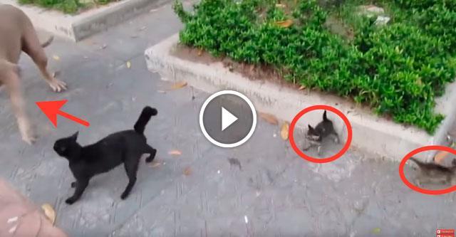 Защищая своего котёнка, мама-кошка набросилась на огромную собаку