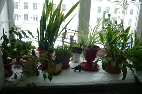 Чудодейственный раствор для полива цветов