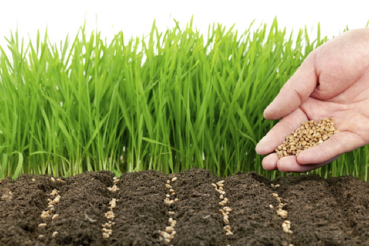 Начинающим огородникам: что такое сидераты и как их правильно использовать