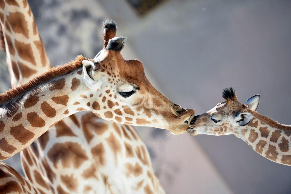 Жизнь животных из разных уго…