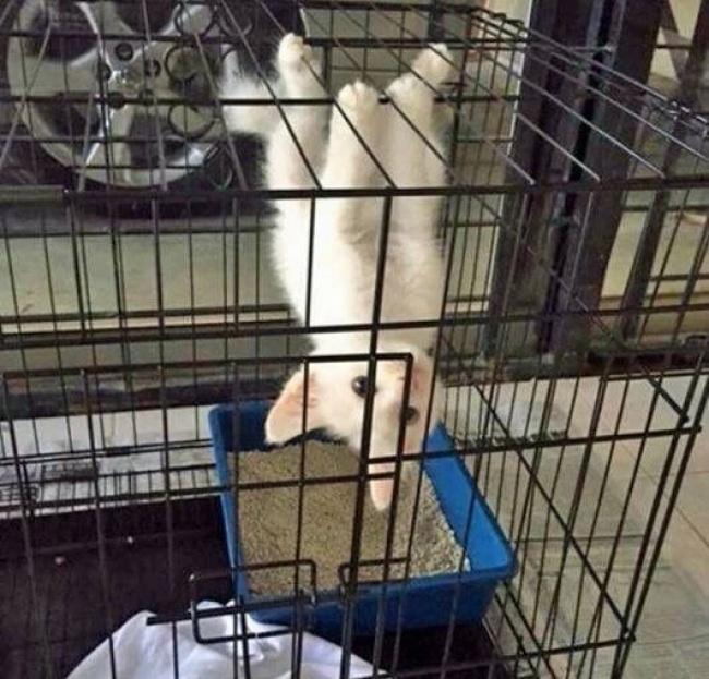 20 котов, которые забыли, как быть котами