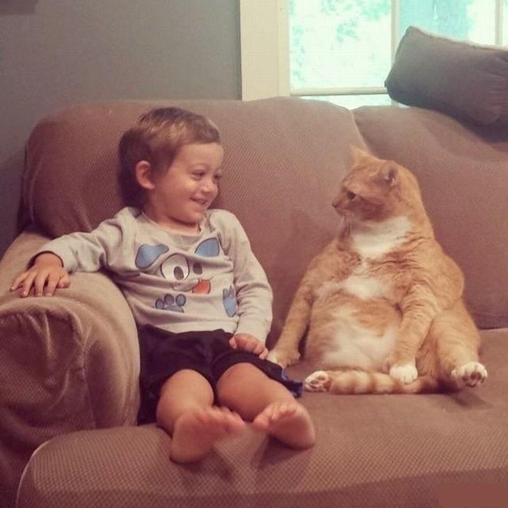 catrules08 15 правил жизни настоящего кота