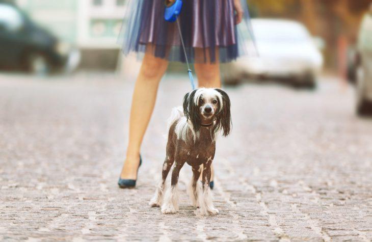 Гуляет дама с собачкой, атут из-за угла гигантский рыжий кот…
