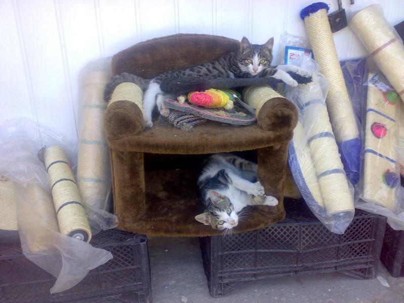 Все условия для комфортного проживания балаклава, интересное, коты, юмор