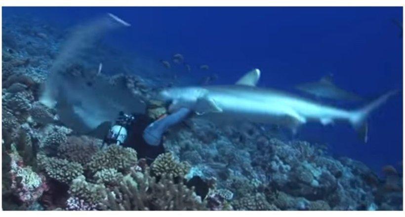 Видео: Акула зубами сорвала …