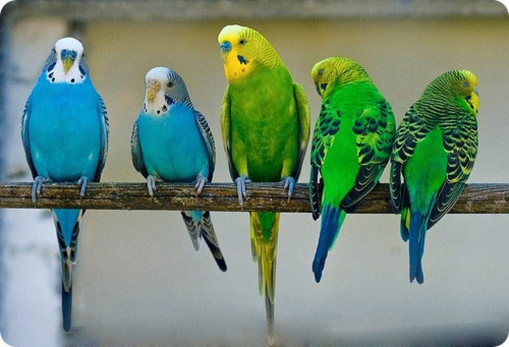Этот попугайчик рассказывает хозяину все, что произошло за день. Очень милое зрелище!