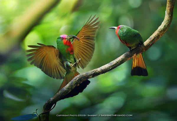 Фотографии птиц by Sompob Sasismit