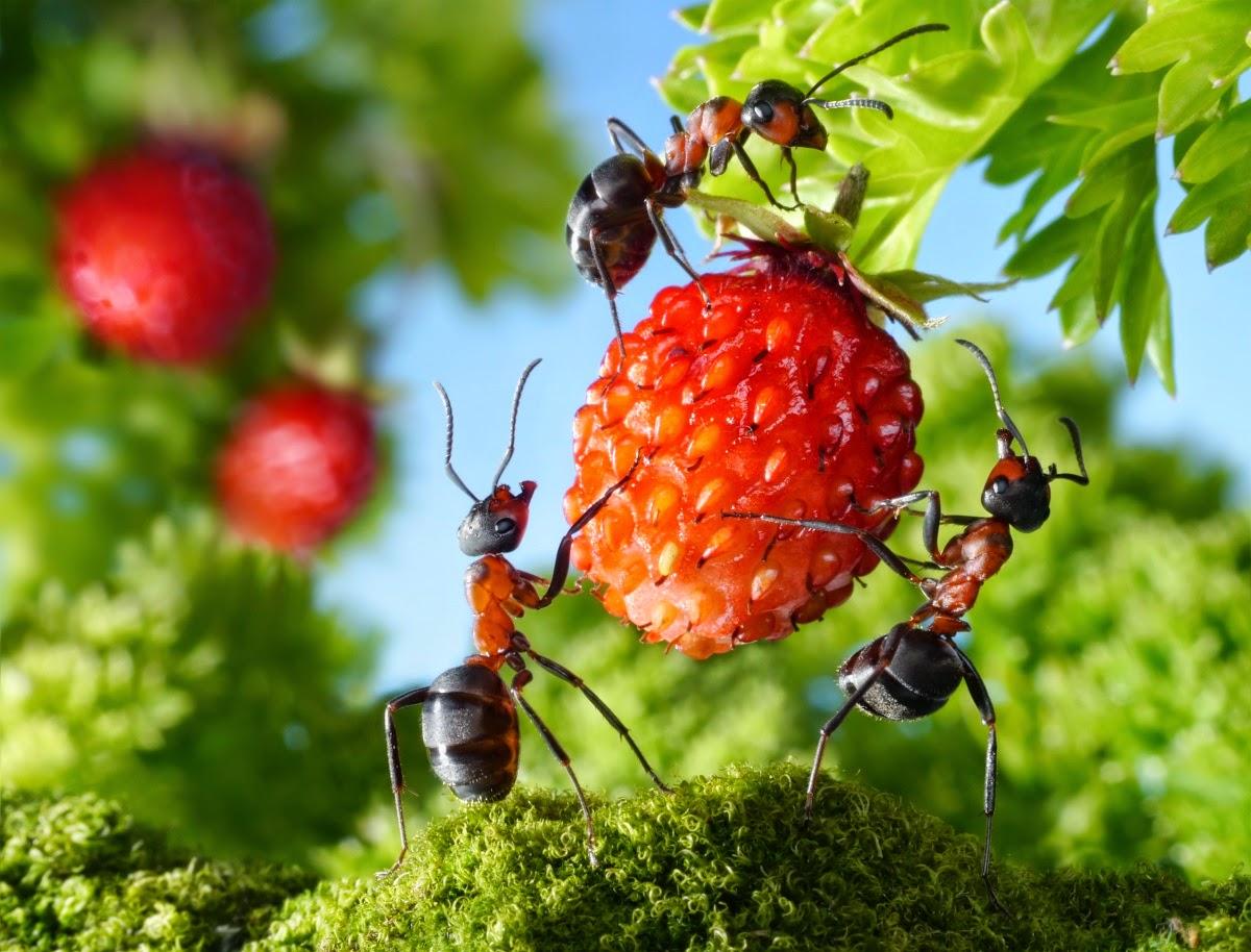 Как избавиться от садовых муравьев. Проверенные средства от садовых муравьев