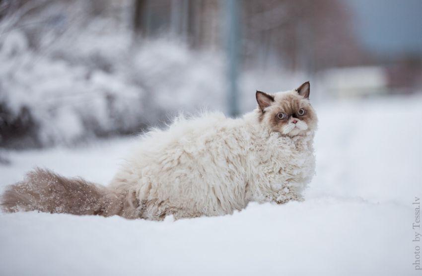 Картинки по запросу Кот впервые увидел снег