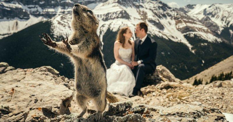 Забавные животные, затмившие молодоженов на свадьбе