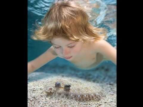 Подводный фотограф Zena Holloway.